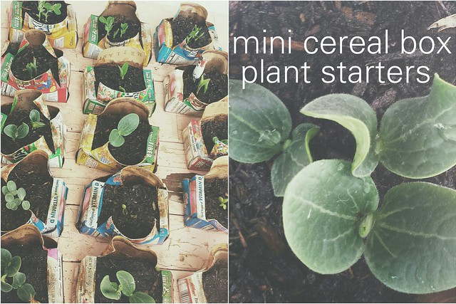 mini cereal box plant starters