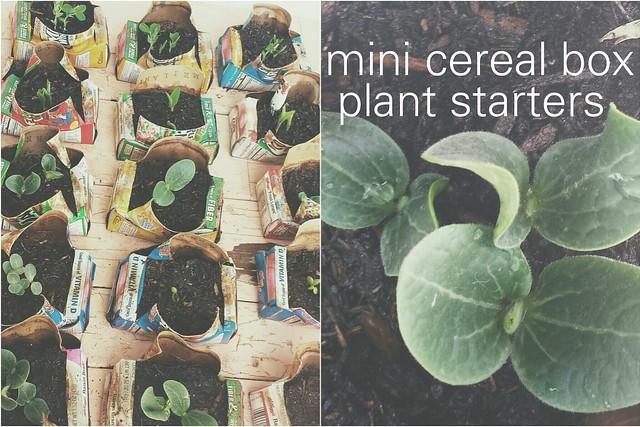 mini cereal box plant starters