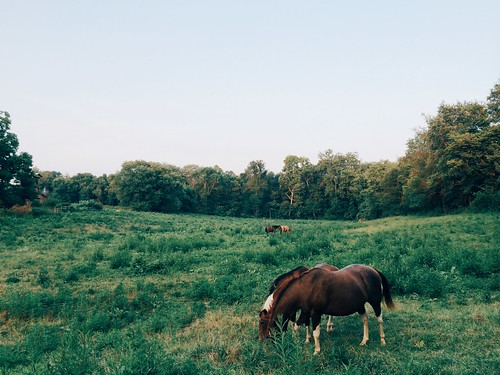 travel summer horses mountains nature beauty animals digital forest landscape freedom woods farm candid exploring free lifestyle indiana visit hills adventure explore co summertime bloomington weeks visual 52 supply iphone roaming vsco livefolk iphoneography vscocam