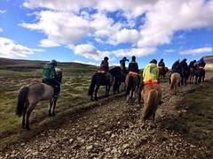 Riding the last day (Day 5 Thingvellir @Eldhestar)