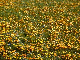 Flower Garden Using Rice Field