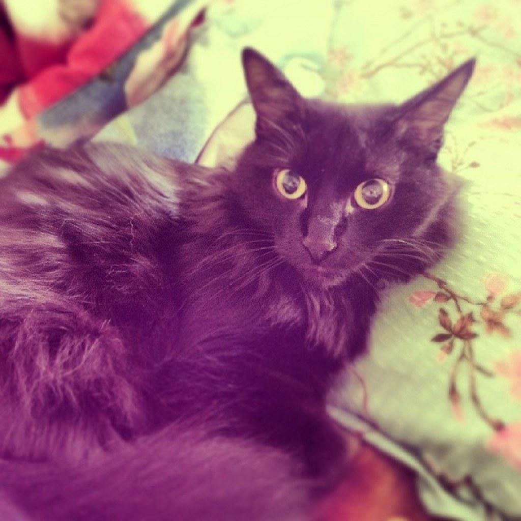 Котэ увидела ужас вселяющий душеразящий страх: пылисос! #cat #cats #mypet #pet #pets #tagsforlikes #tagforlikes #followme #love #cute #nice #кошка #домашняяскотинка #чернаякошка #ужасвселяюшийстрах #ужас #глаза #глазища