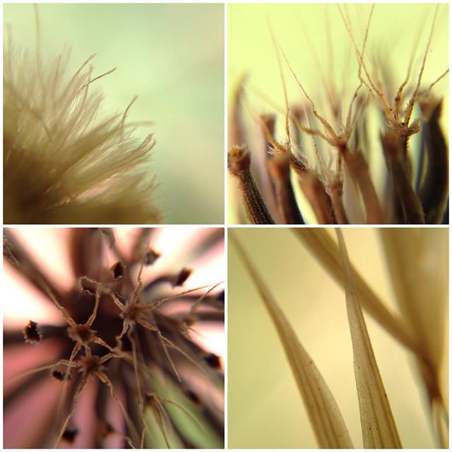 Cloth-Clip 6X Macro Scope (Microscope / Close-up) Demo Collage