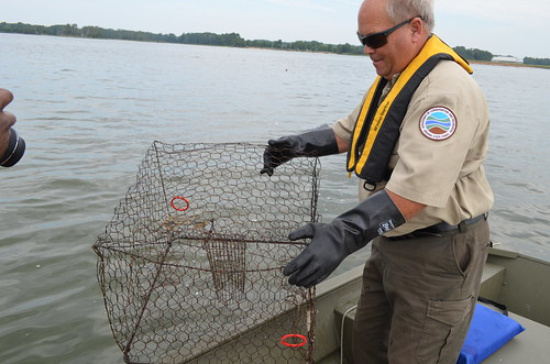 Park Ranger Andy Ransome pulls up a crab pot. Belle Isle State Park is located on Virginia's Northern Neck in Lancaster, Virginia.