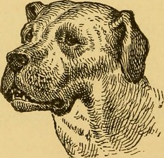 """Image from page 145 of """"Breeding, training, management, diseases & c. of dogs:"""" (1877)"""