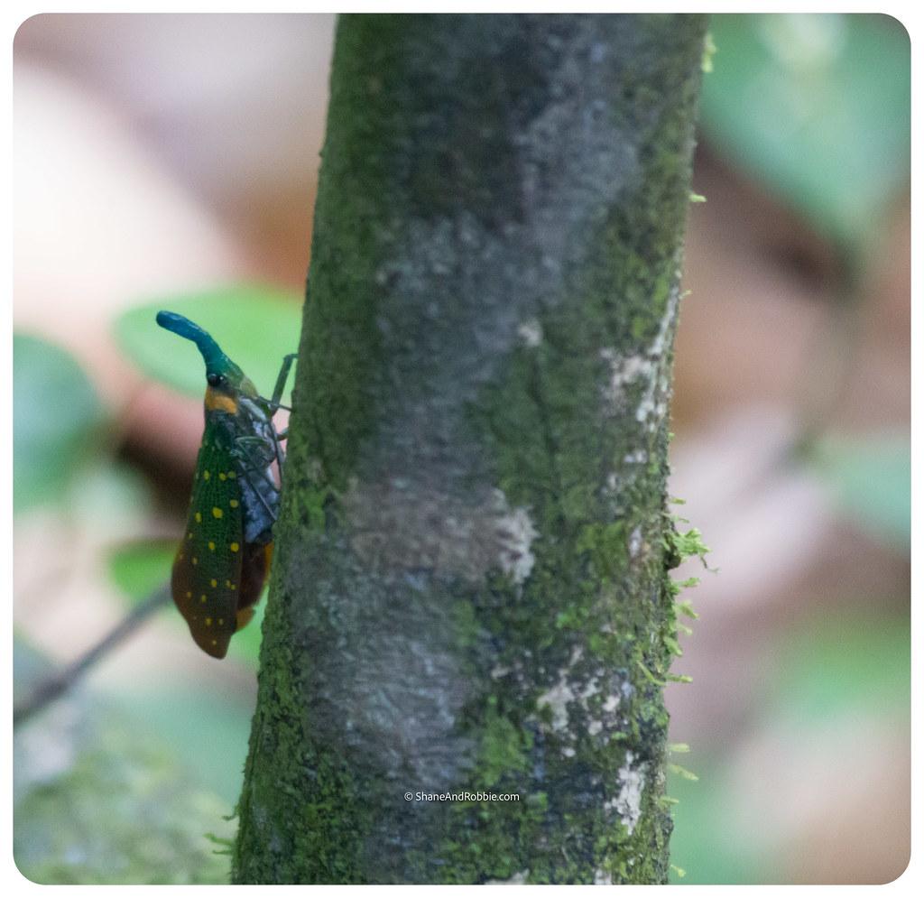 Borneo-20170411-IMG_7583