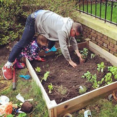 Gardening with pops.  #violetavery #earthday #preschoolgardner