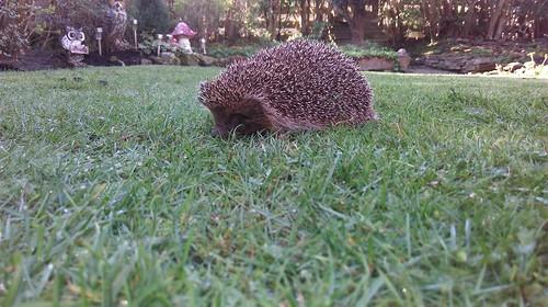 Garden pest control.