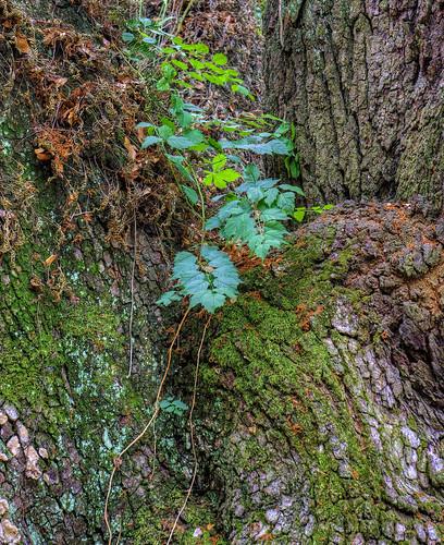 tree moss texture