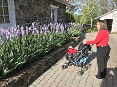 Kate and the twins admire the blooming irises as we arrive at dinner at the club