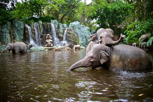 Jungle Cruise Elephants!