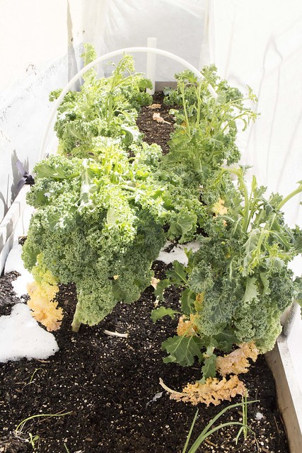 Kale, Sleet Snow Storm April 2014_1