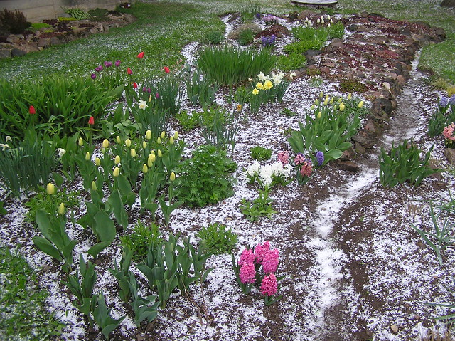 Perennials Bed after hail