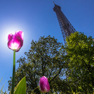 Spring in Paris | square version