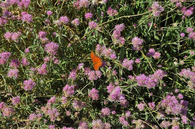 El Zanjón - Flora silvestre