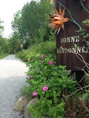 Sentier de vélo dans les Bois-Francs. Champayeur.