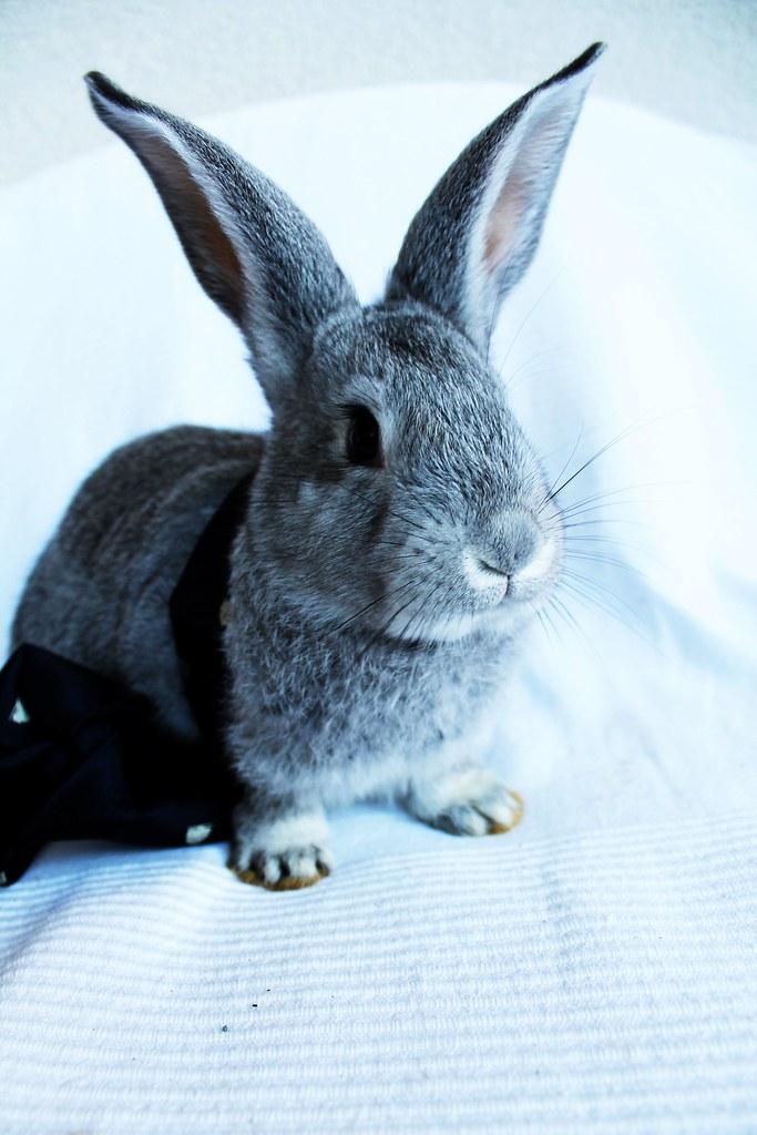 Bunny - Magazine cover