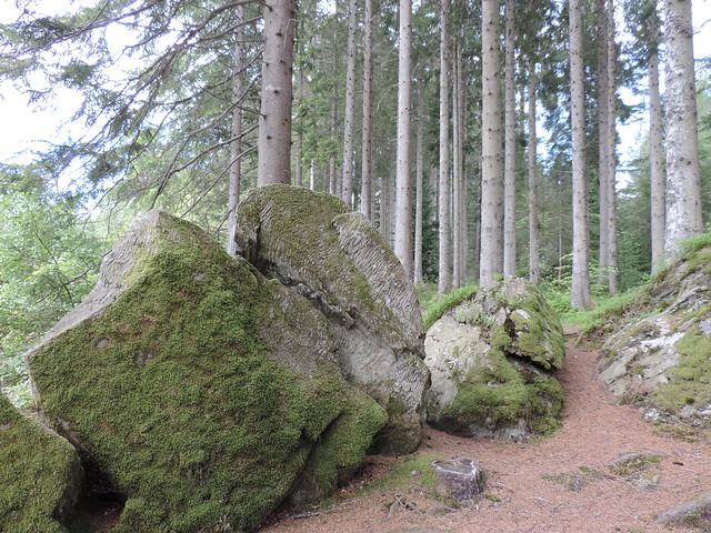rockforest