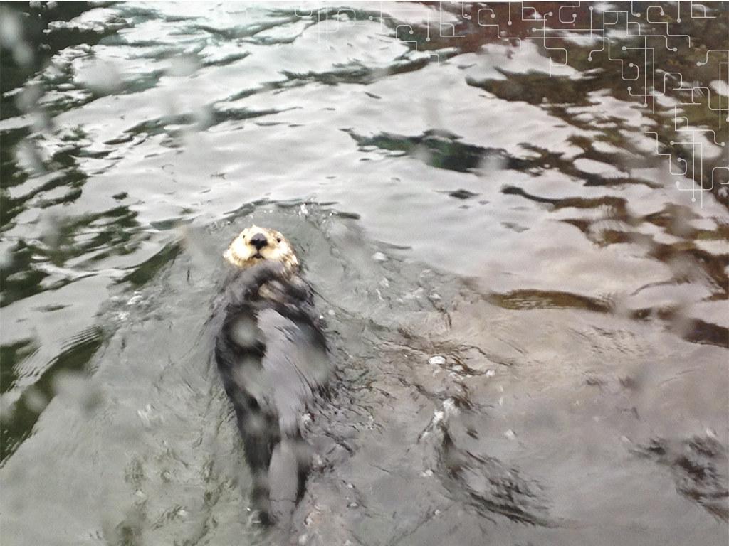 Lontra marinha