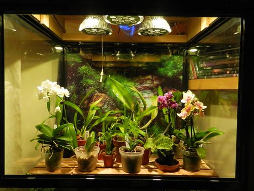 DSCN2586 Orchid Terrarium