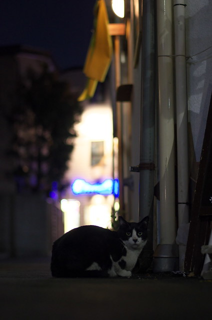 東京路地裏散歩 谷中のネコ 2014年5月10日