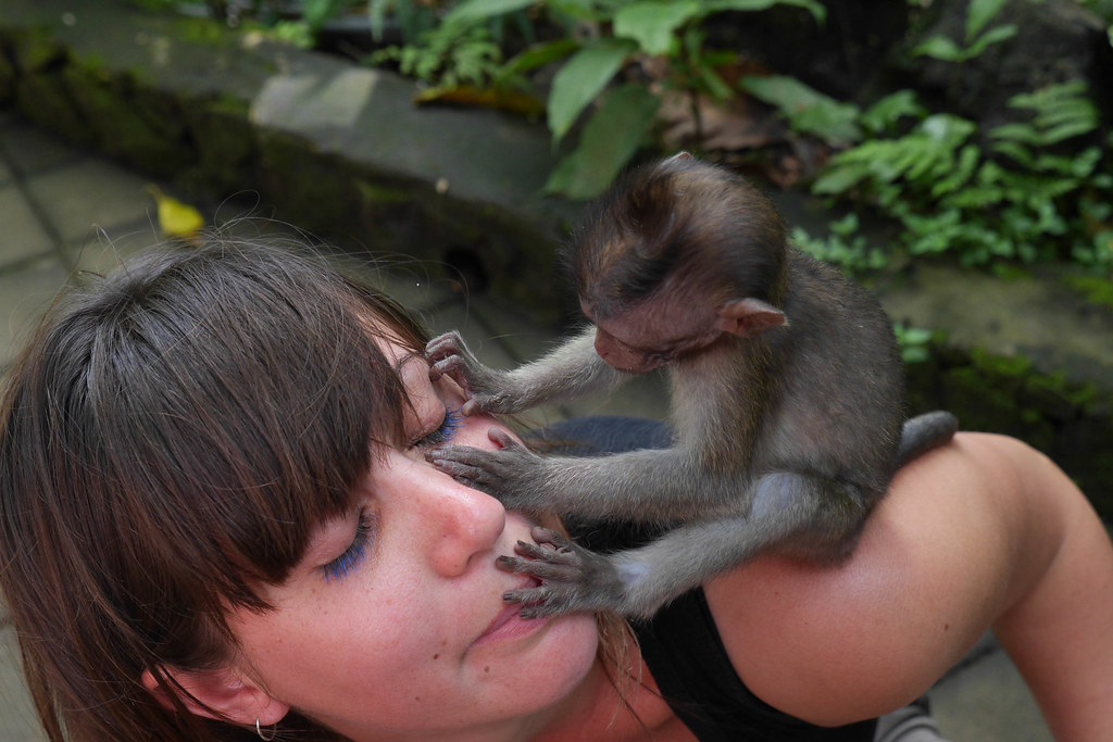 Baby macaque inspects girls eye.jpg