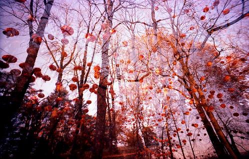 Outono em Lyon.