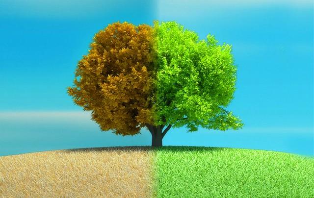 sustentabilidad-diarioecologia.jpg