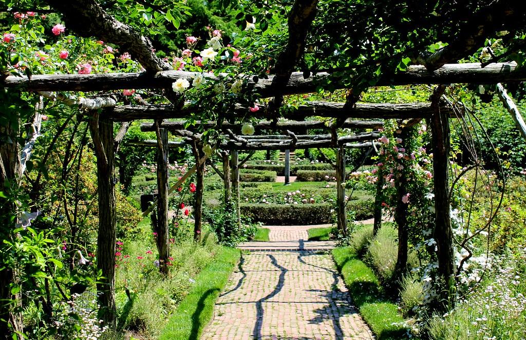 Rose garden at Old Westbury