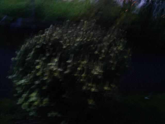 PIC_1552