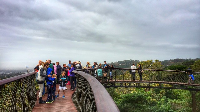 Taking it in, en mass... People Watching EyeEm Best Shots Eye4photography at Centenary Tree Canopy Walkway (Boomslang)