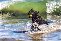 7-20140614-Dog-Beach-0072