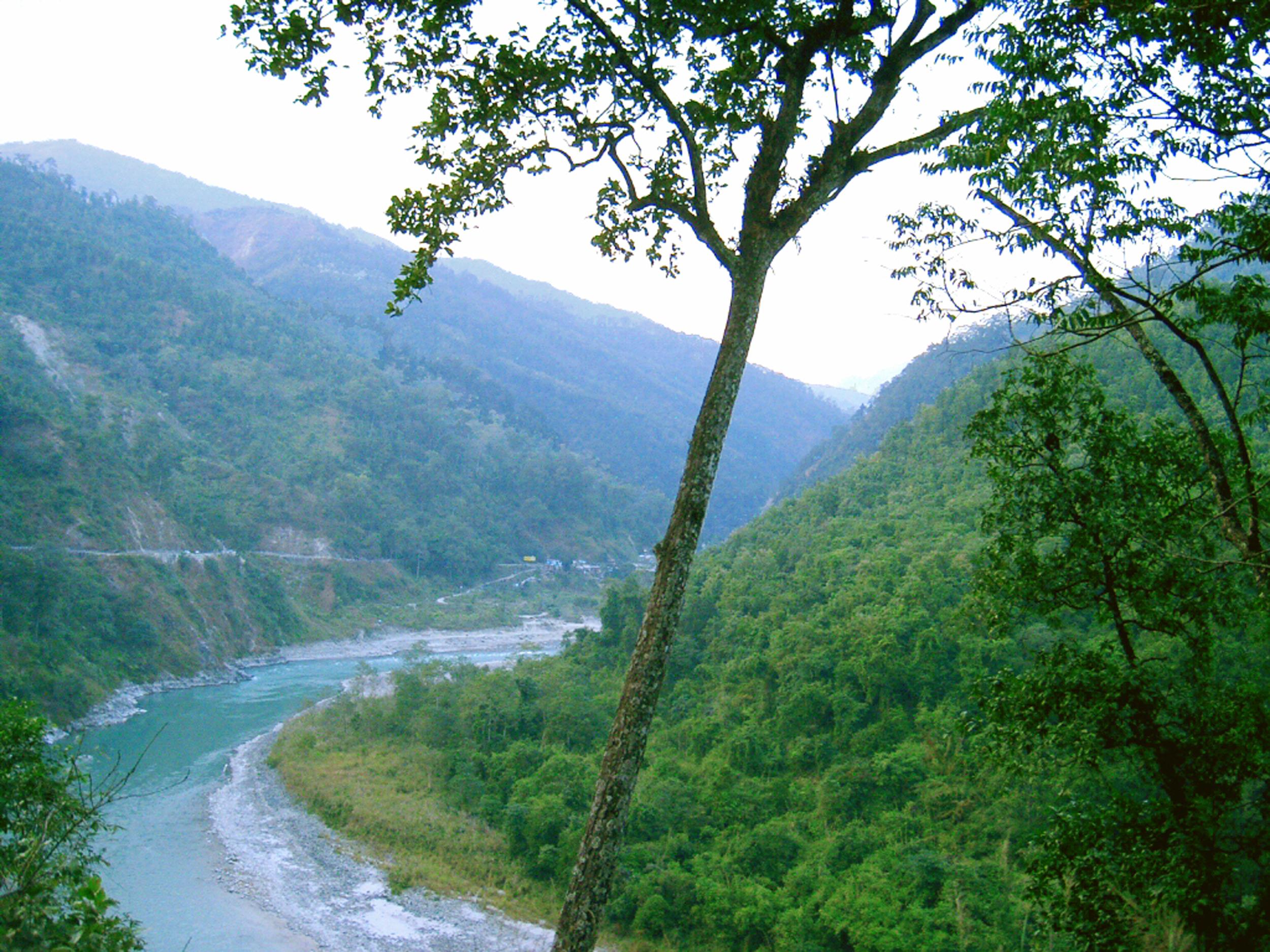 हिमालयी क्षेत्रों में हरी-भरी वनस्पतियां