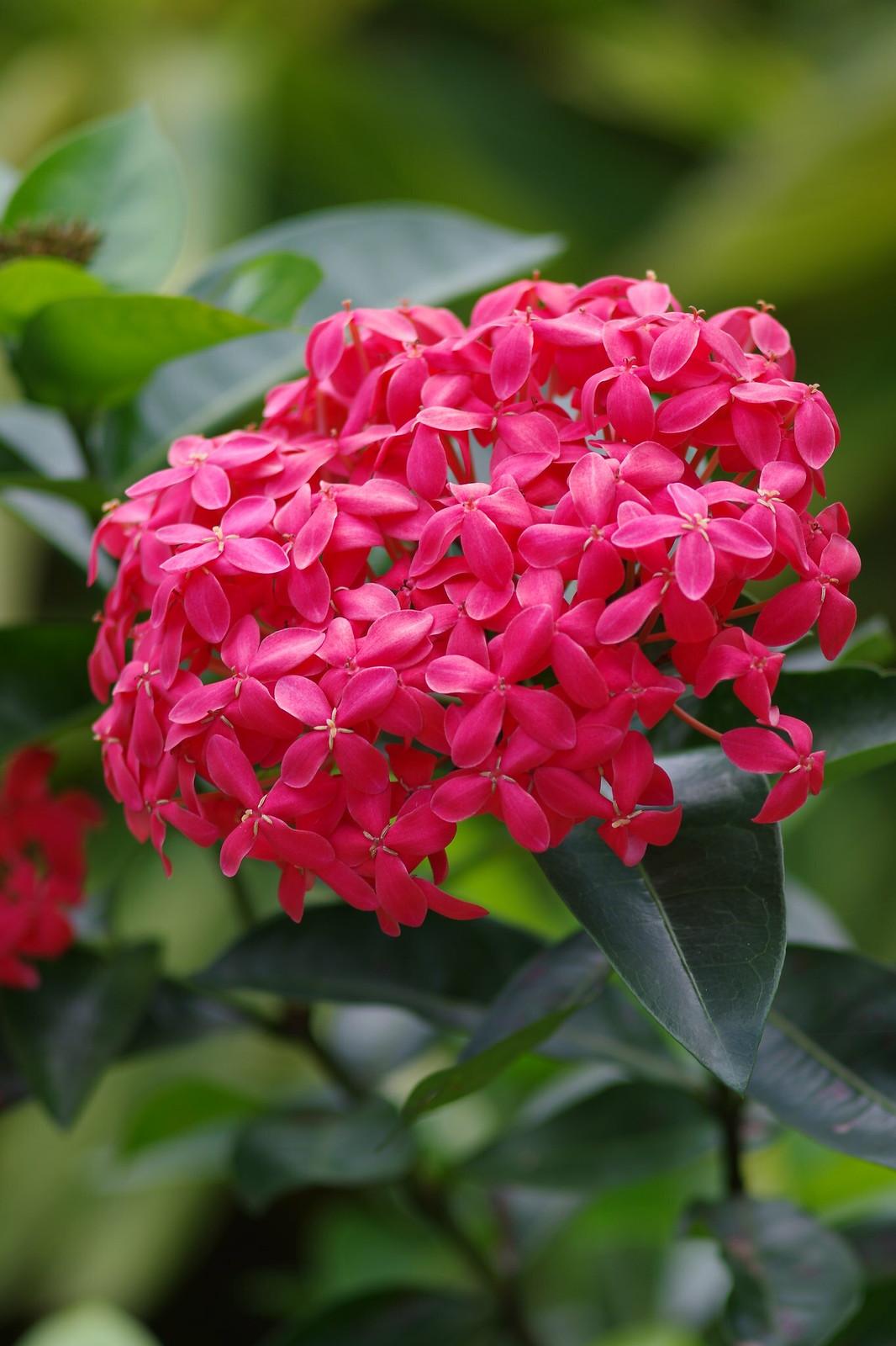 陽光下的花~