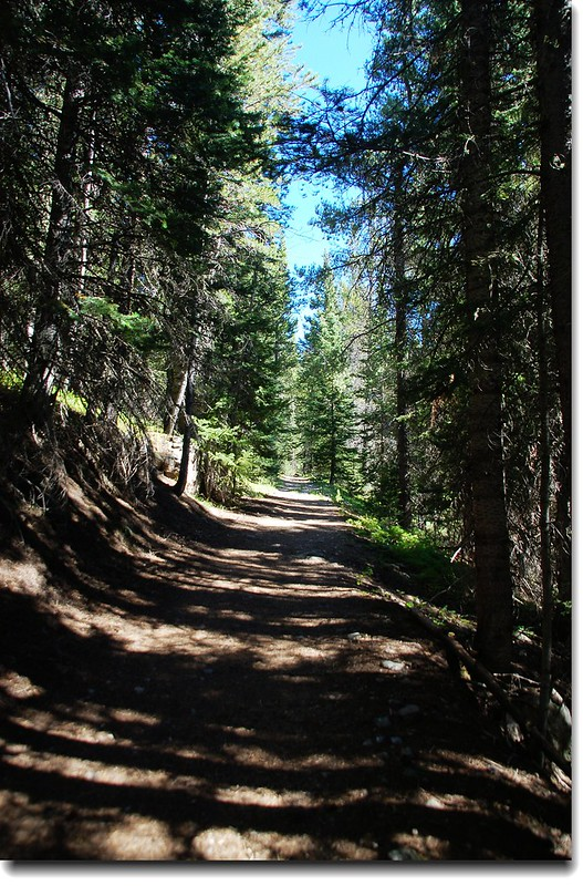 Forset Lakes Trail 1
