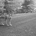 OR7pup_017_7-12-14 by USFWS Pacific