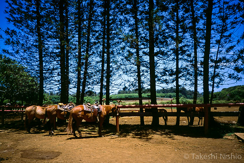 waiting horses