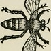 "Image from page 53 of ""A book about bees. Their history, habits, and instincts; together with the first principles of modern bee-keeping for young readers"" (1886) by Internet Archive Book Images"