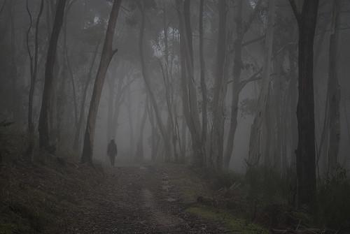longexposure mist fog forest landscape nikon southaustralia adelaidehills laszlobilki