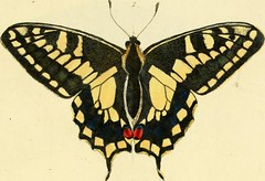 """Image from page 23 of """"Descriptions and figures of some new lepidopterous insects, chiefly from Nepal"""" (1846)"""