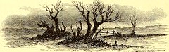 """Image from page 839 of """"St. Nicholas [serial]"""" (1873)"""