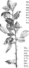 """Image from page 37 of """"Lessons with plants. Suggestions for seeing and interpreting some of the common forms of vegetation"""" (1907)"""