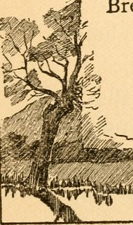 "Image from page 106 of ""At early candle light and other poems"" (1900)"