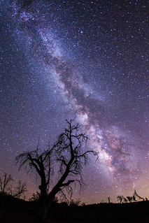 Milky Way and dead tree. Different perspective and processing.