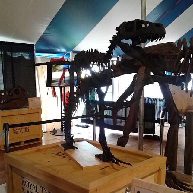 Dinosaur skeleton from Alberta,  Confederation Landing Park #princeedwardisland #pei #charlottetown #confederationlandingpark #dinosaur #pei150 #alberta