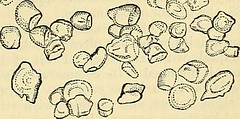 "Image from page 734 of ""Cooley's cyclopaedia of practical receipts and collateral information in the arts, manufactures, professions, and trades including medicine, pharmacy, hygiene, and domestic economy : designed as a comprehensive supplement to the Ph"