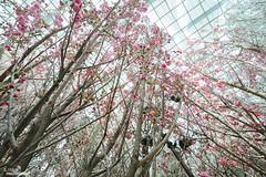 Blossom Bliss 2017