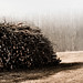 Small photo of Timber Industry