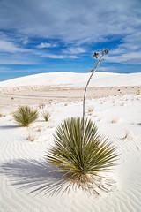 White Sands National Monument (3-16-17 - 3-17-17)