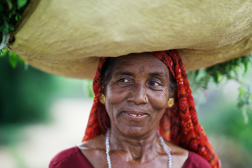 Old Indian woman carrying grass on her head, village near Bujh, Gujarat